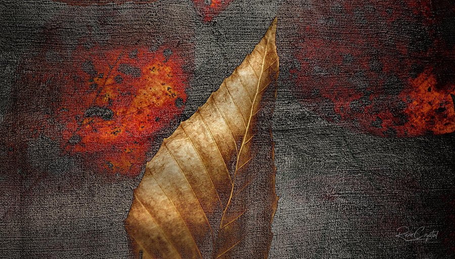 Autumn's Concrete Impression by Rene Crystal