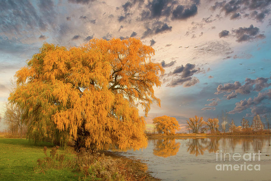 Willow Photograph - Autumns Ending by Marilyn Cornwell