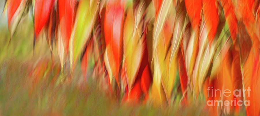 Autumns Feathers of Fire Photograph by Marilyn Cornwell