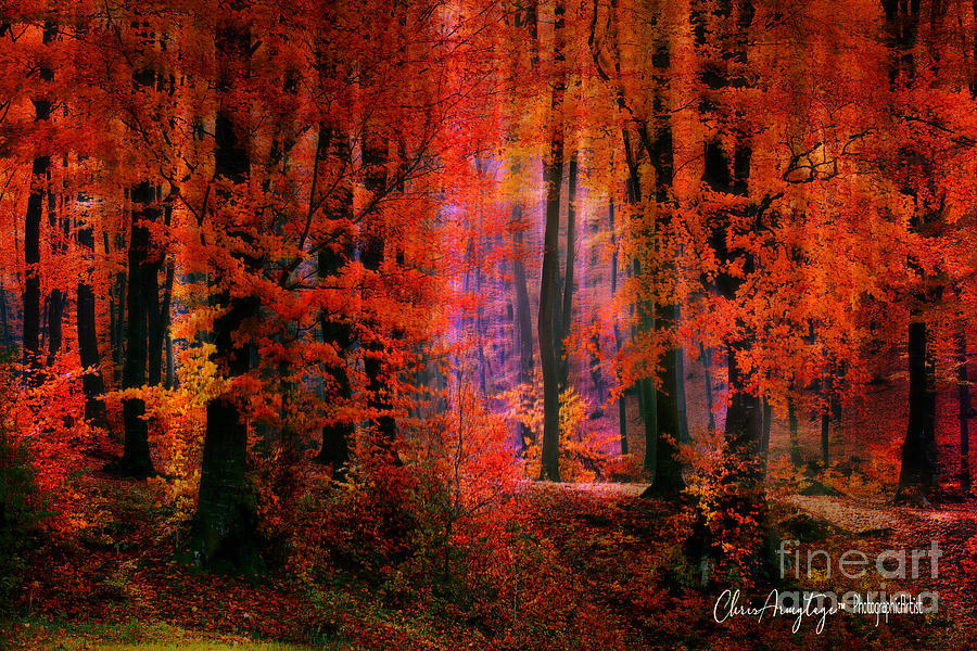 Autumn's paintbrush by Chris Armytage