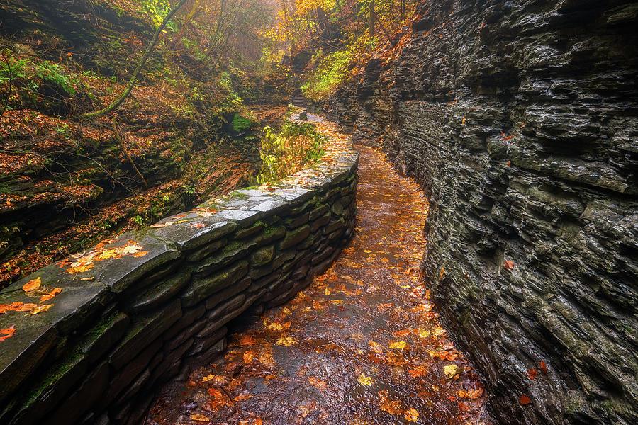 Autumns Path Photograph
