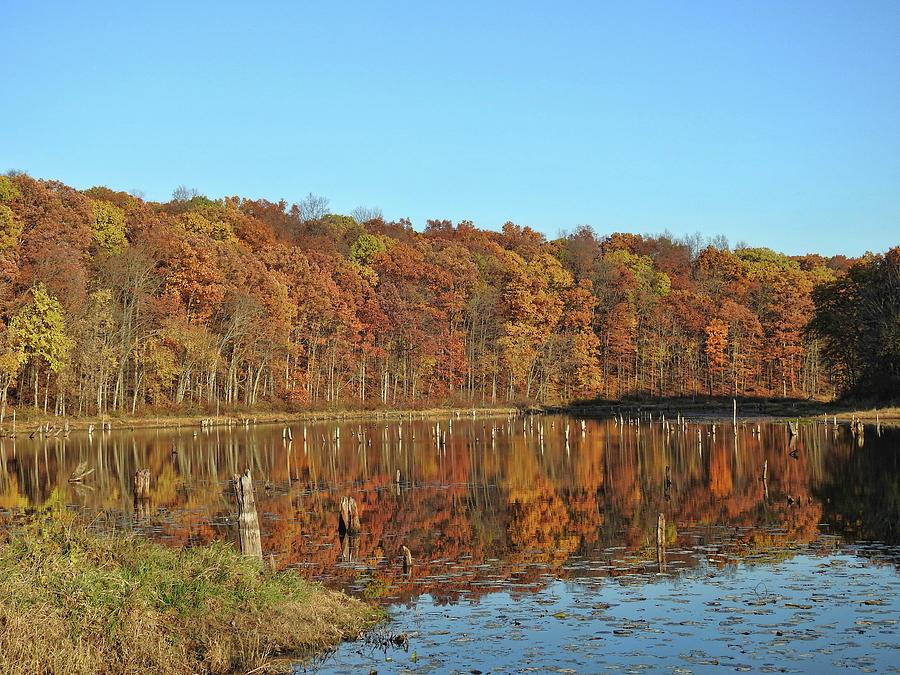 Autumns Reflection Photograph
