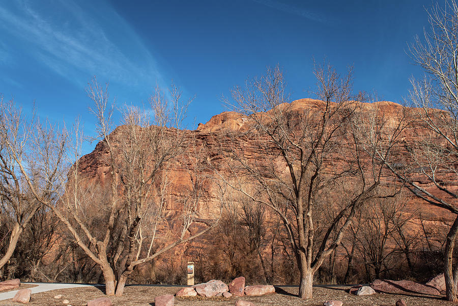 Azure Sky Red Rocks and Cottonwoods by Tom Cochran