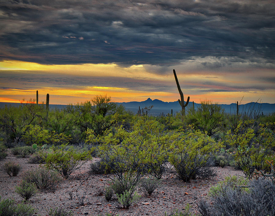 Baboquivari Peak and Saguaro Cactus by Chance Kafka