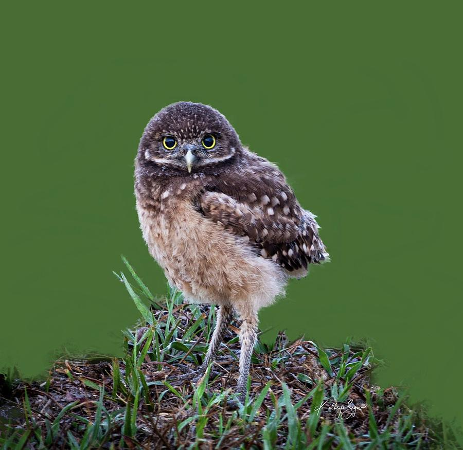 Baby Burrowing Owl 1 Photograph By Kathryn Seguin