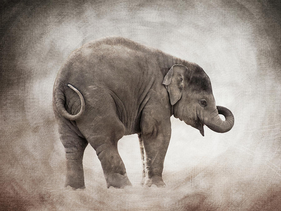 Baby Elephant Photograph