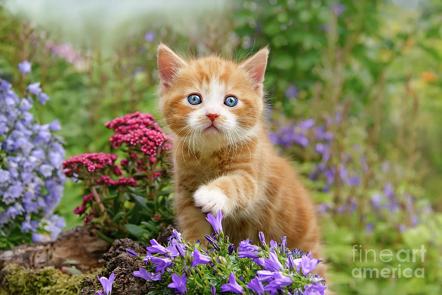 Baby Kitten With Flowers Photograph By Katho Menden