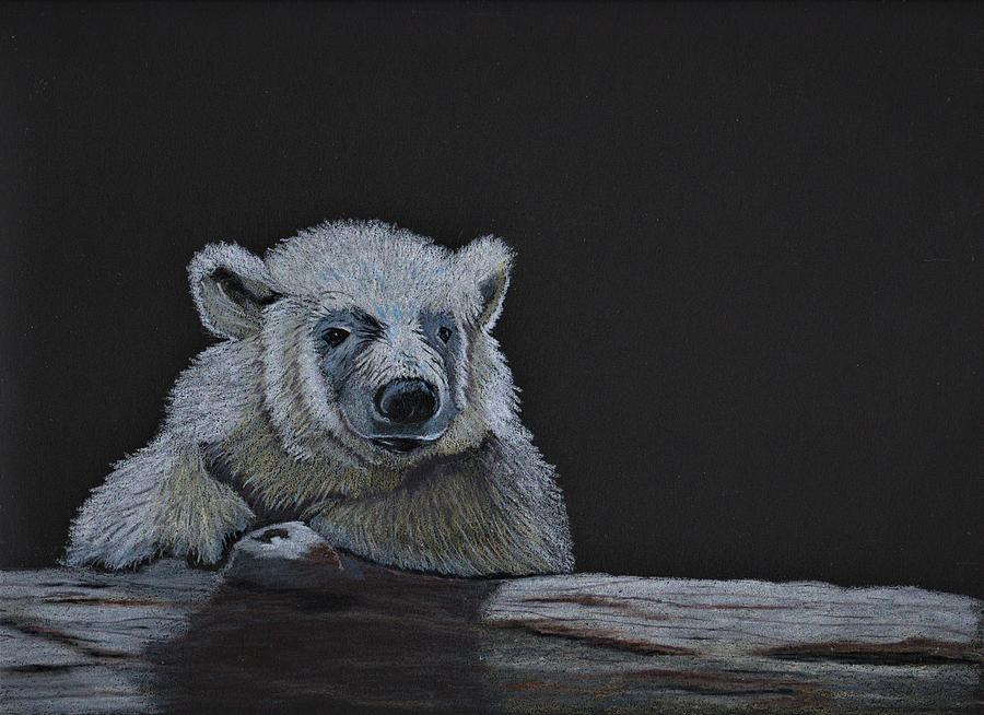 Baby Polar Bear Drawing By Jay Johnston