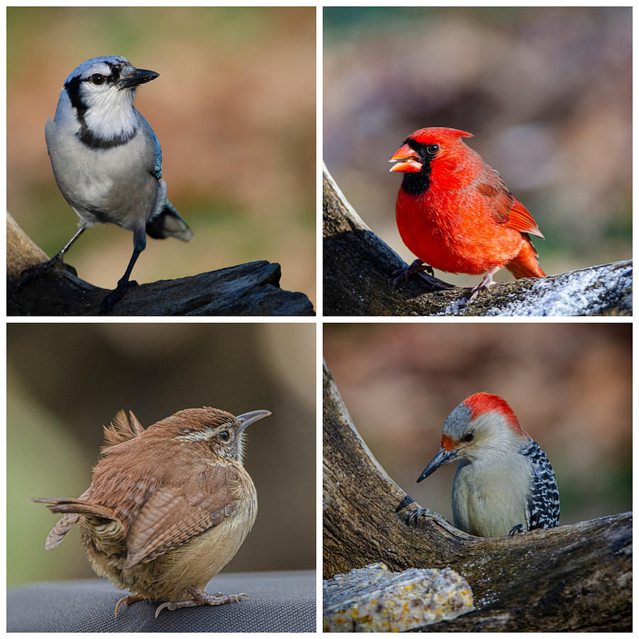 Bird Photograph - Backyard Birds by Jim Cook