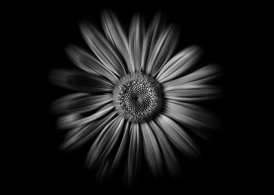 Backyard Flowers In Black And White 52 Flow Version Photograph