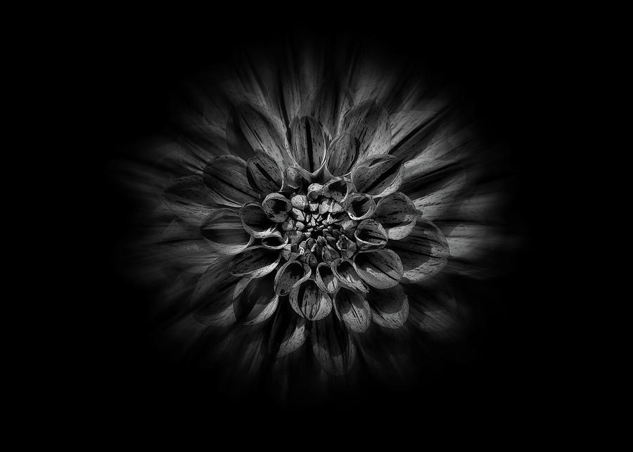 Backyard Flowers In Black And White 57 Flow Version Photograph