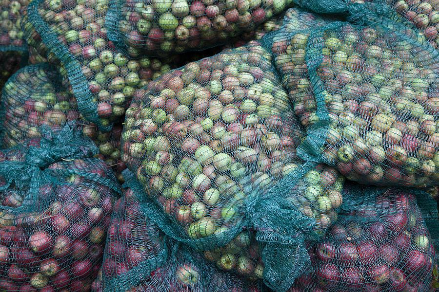 Bags of organic apples Photograph by Joseph Clark