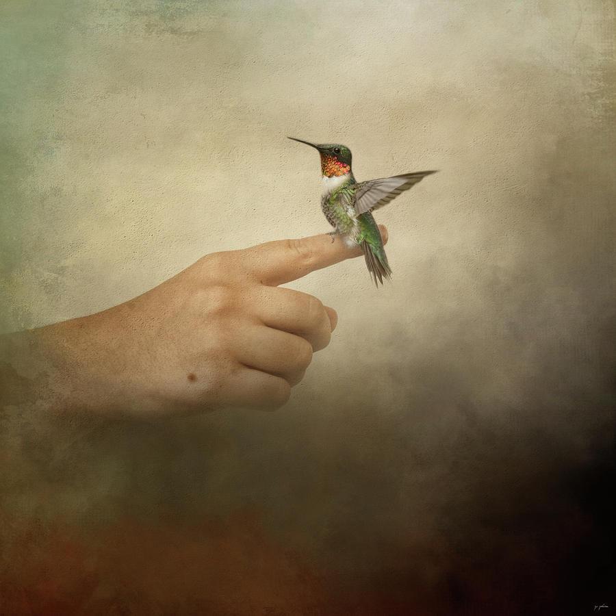 Balance Hummingbird A Bird In The Hand by Jai Johnson