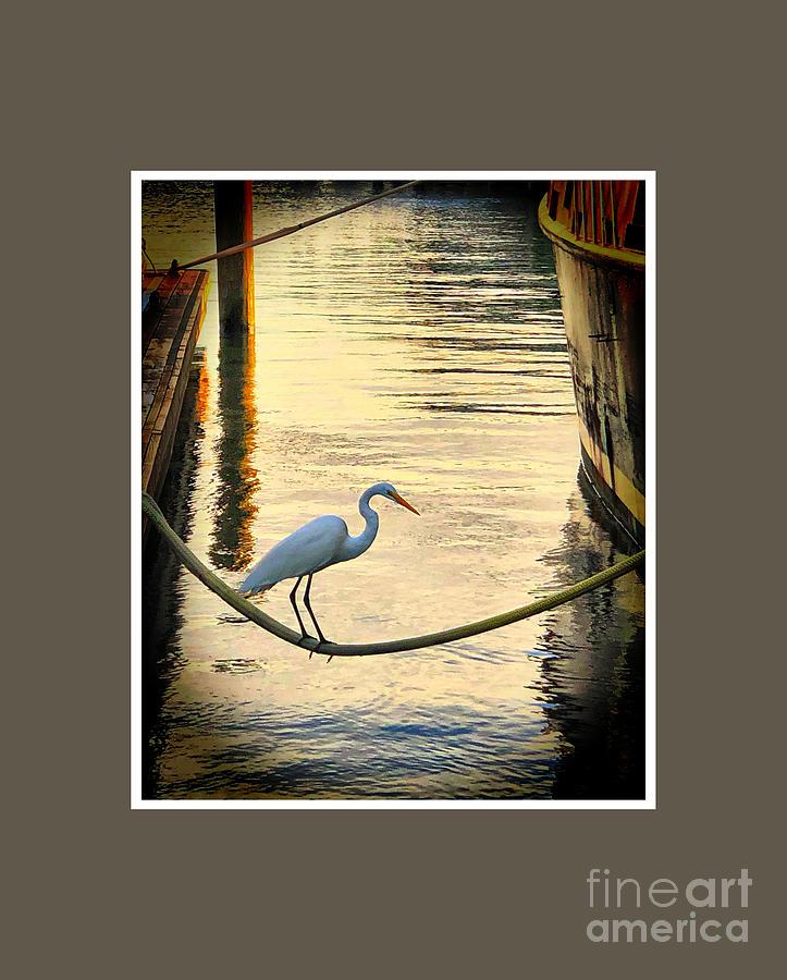 Bird Photograph - Balancing Bird by Steven Norris