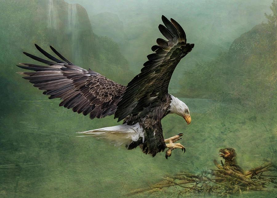Bald Eagle Landing by Patti Deters
