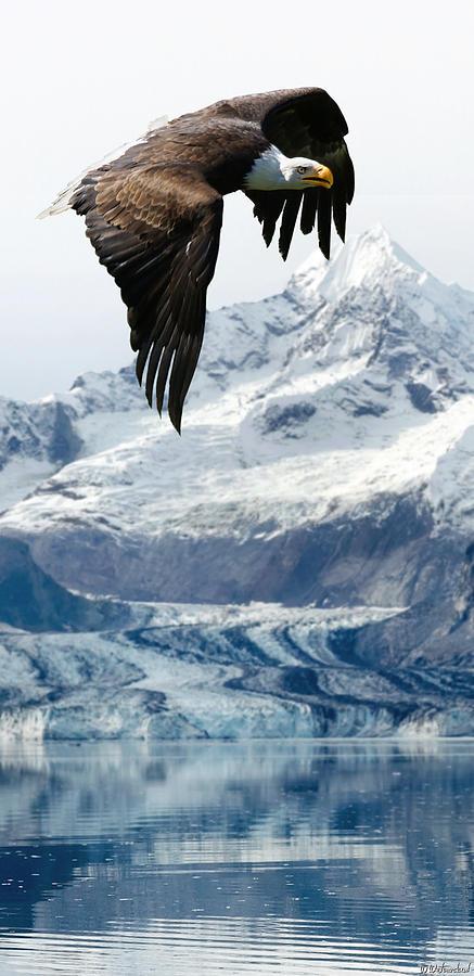 Bald Eagle over Glacier vertical by Weston Westmoreland