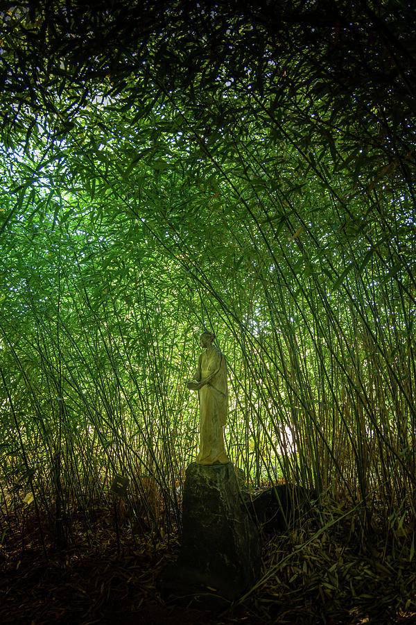 Bamboo Photograph - Bamboo Garden by Kevin Schwalbe