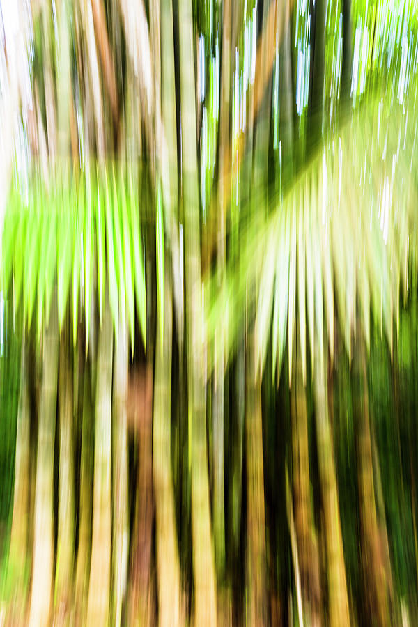 Bamboo Impressions Photograph