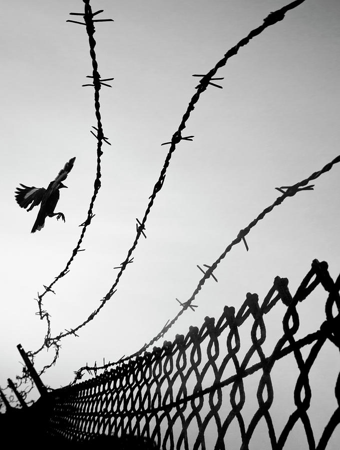 Barbed Wire by Christopher Johnson