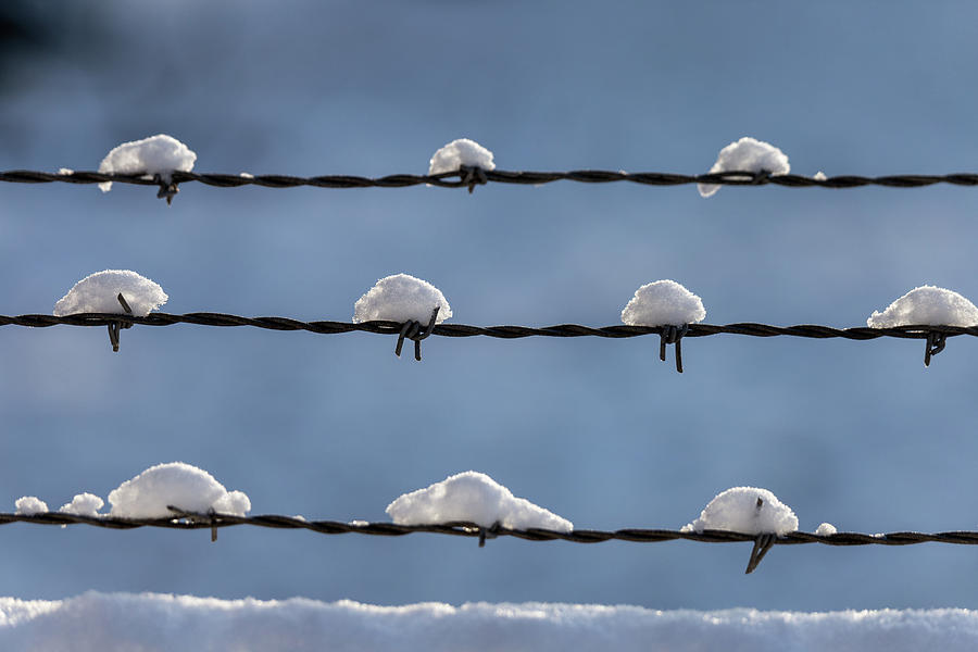 Barbed Wire Snow by Lauri Novak