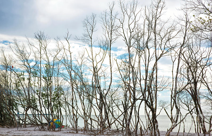 Bare Trees Photograph - Bare Trees At The Beach by Felix Lai
