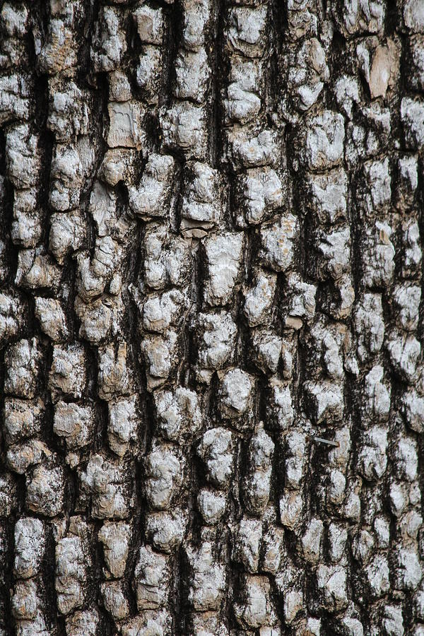 Lake Leatherwood Photograph - Bark, Lake Leatherwood Shoreline by Callen Harty