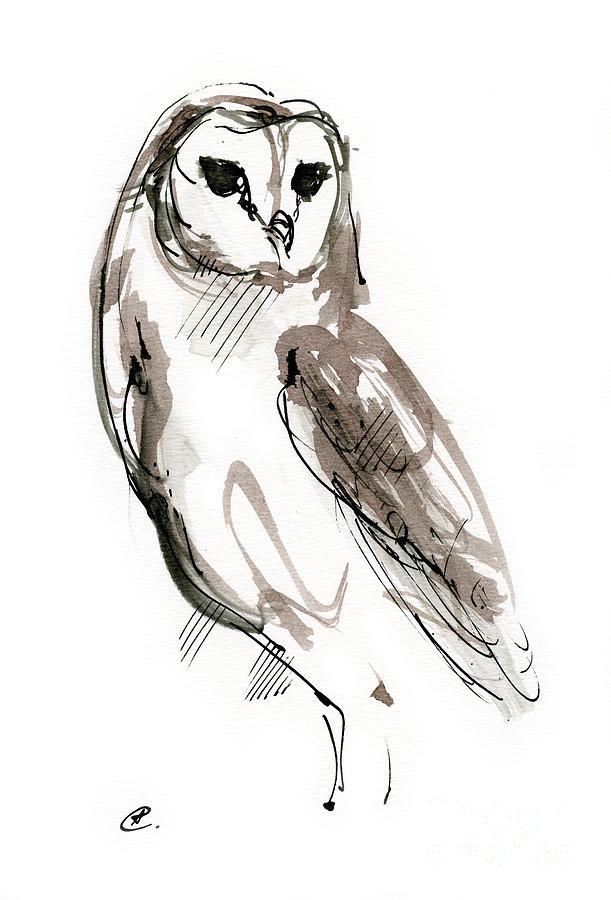 Barn owl 2019 12 02 by Angel Ciesniarska