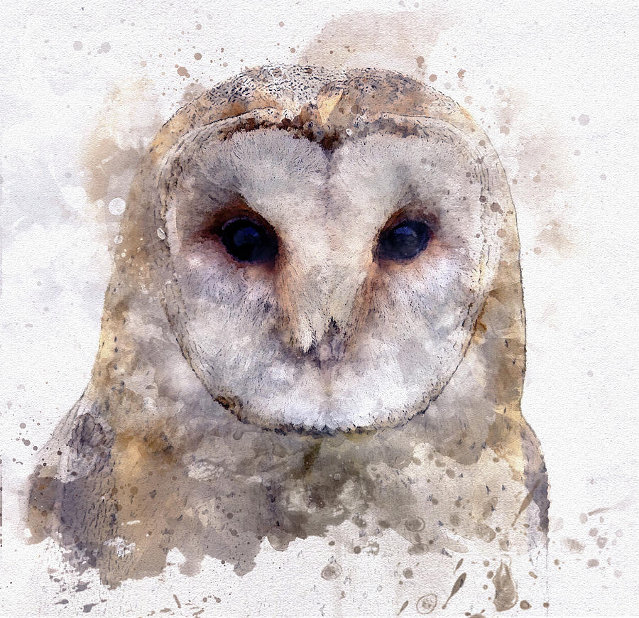 Barn Owl In Watercolor Digital Art