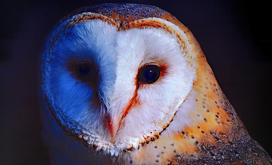 Barn Owl by Joy of Life Arts