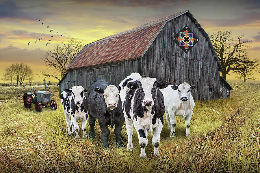 Barn Quilt With Cattle And Tractor At Sunset Photograph