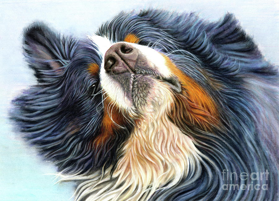 Bernese Mixed Media - Baron by Donna Mulley