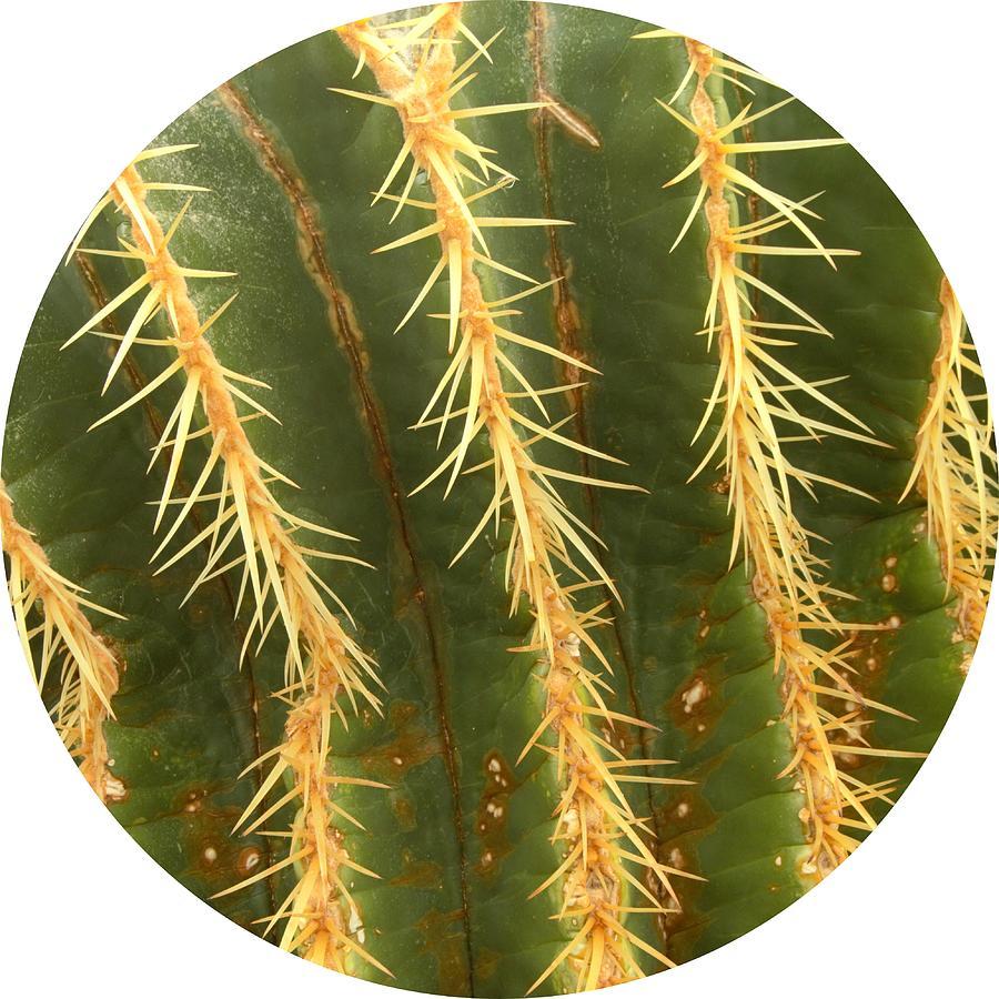 Barrel Cactus 2 Photograph