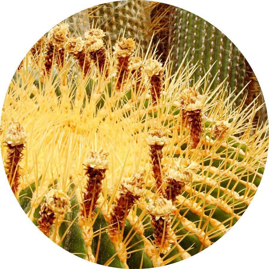 Barrel Cactus Photograph