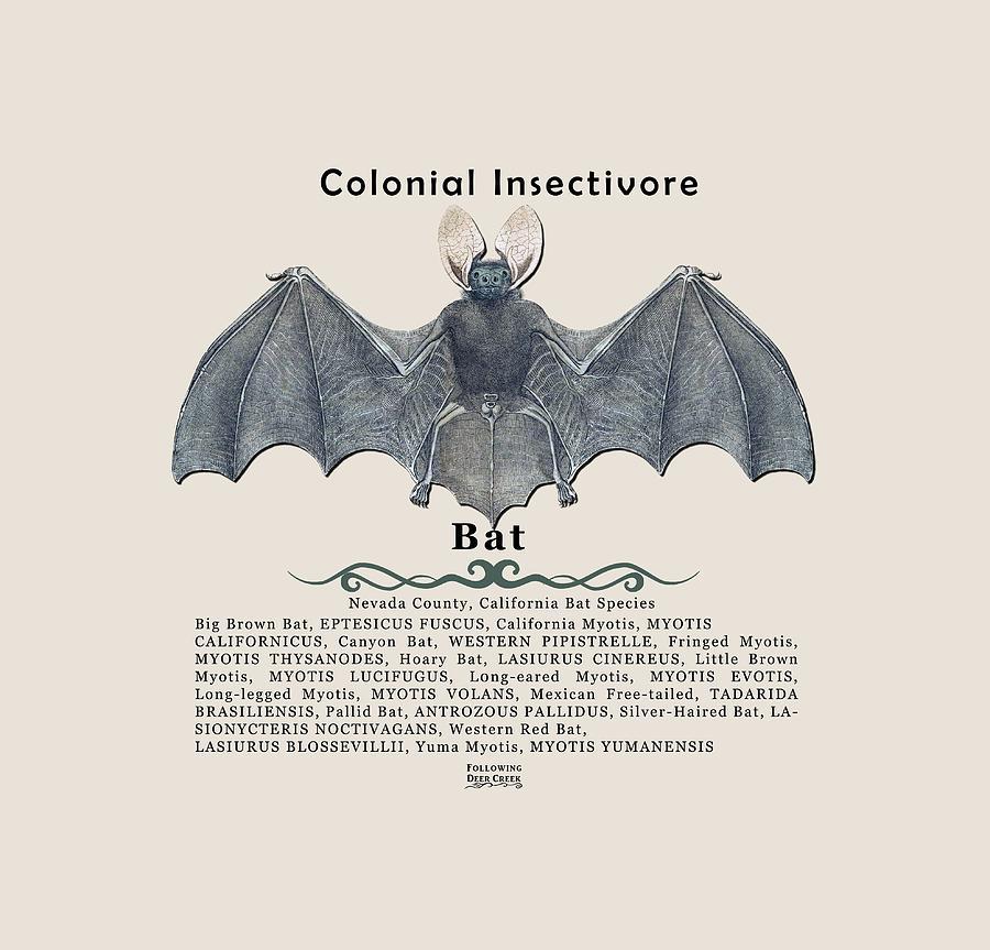 Bat Digital Art - Bats Of Nevada County by Lisa Redfern