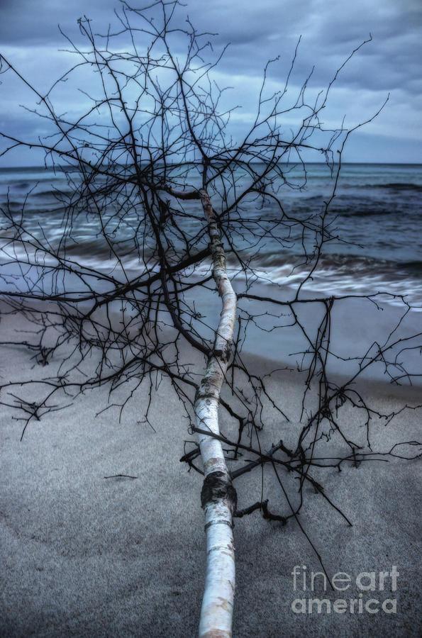 beach birch by AnnMarie Parson-McNamara