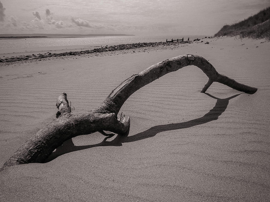 Beach Driftwood Crow Point Devon Monochrome Photograph