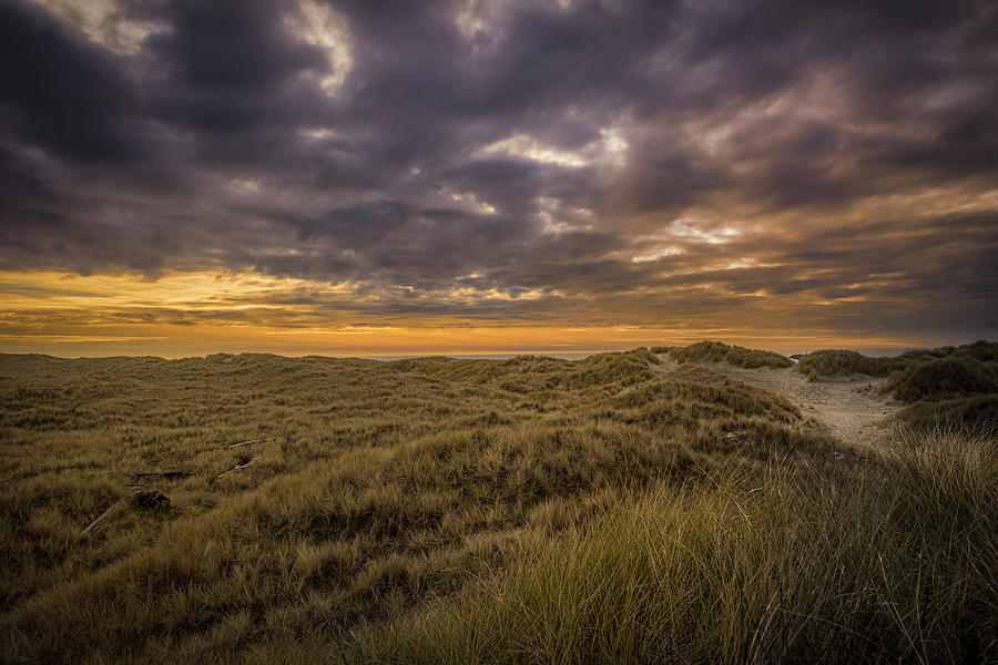 Beach grass and sky by Bill Posner