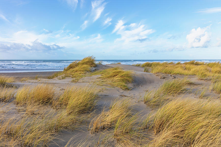 Beach Grass at Cannon Beach by Mike Centioli