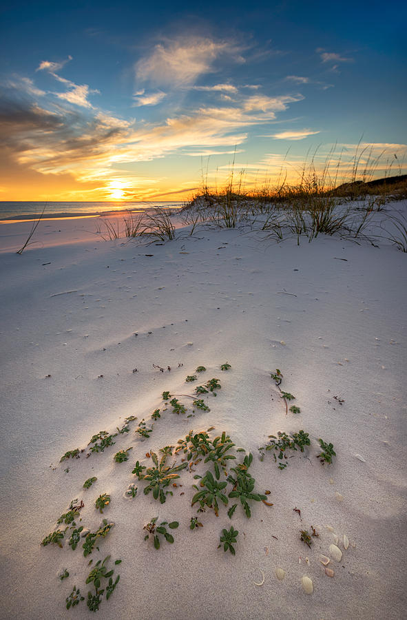 Florida Photograph - Beach Plants At Sunset by Mike Whalen