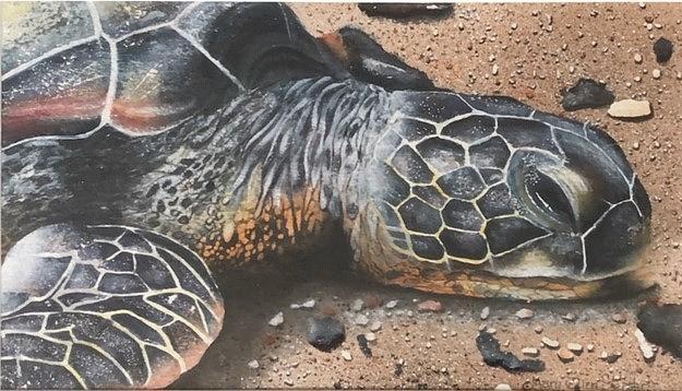 Oceans Painting - Beachcomber - Green Sea Turtle by Mary Ellen Gerster