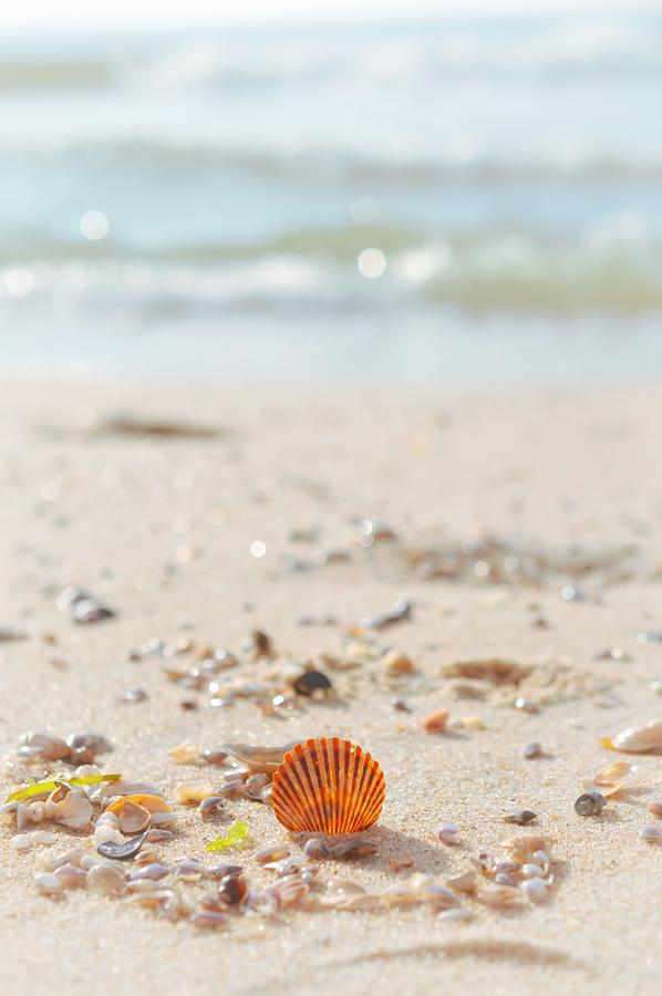 Beachcombing by Shannon Kelly