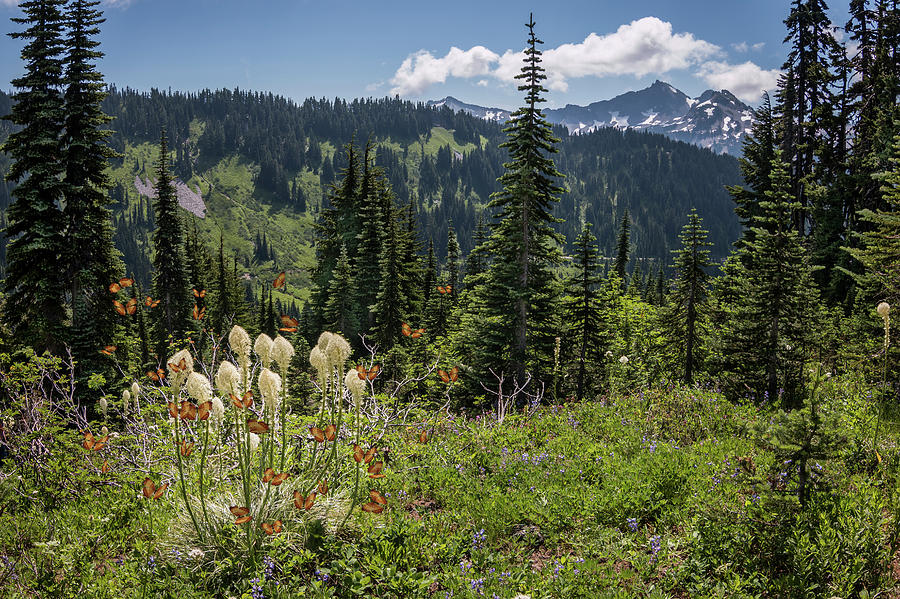 Bear Grass Flowers Mountain by Patti Deters