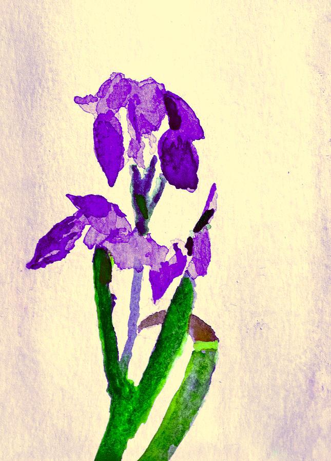 Bearded Iris by Paul Thompson