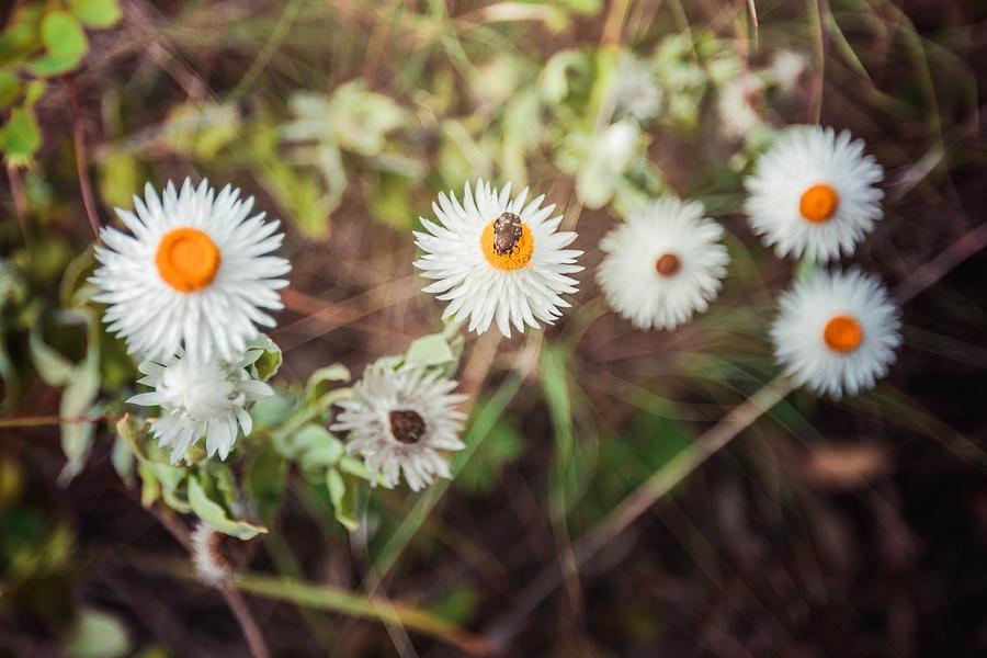 Beatle Flower Photograph by Lianne B Loach