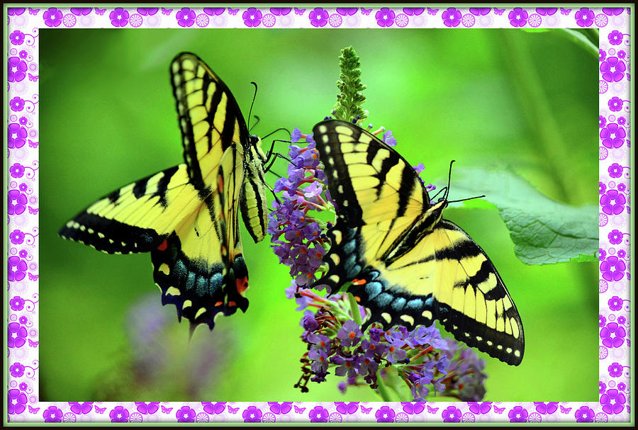 Beautiful Butterflies Mixed Media