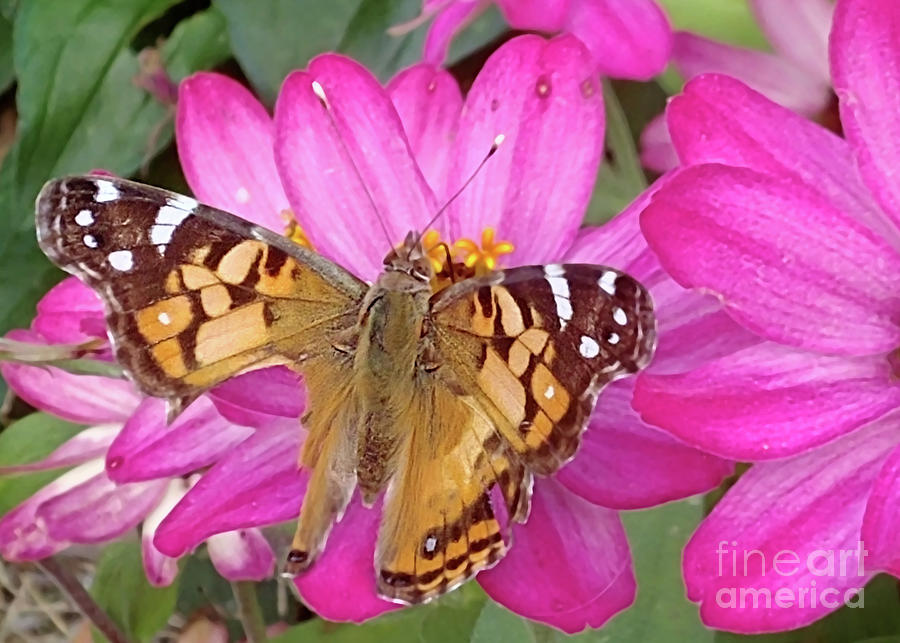 Beautiful Butterfly Photograph - Beautiful Butterfly with Wounded Wings by Kristin Aquariann