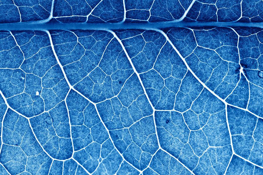 Beautiful Closeup Plant Texture Background Photograph