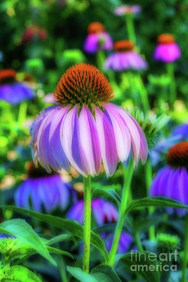 Beautiful Cone Flower by Tony Baca