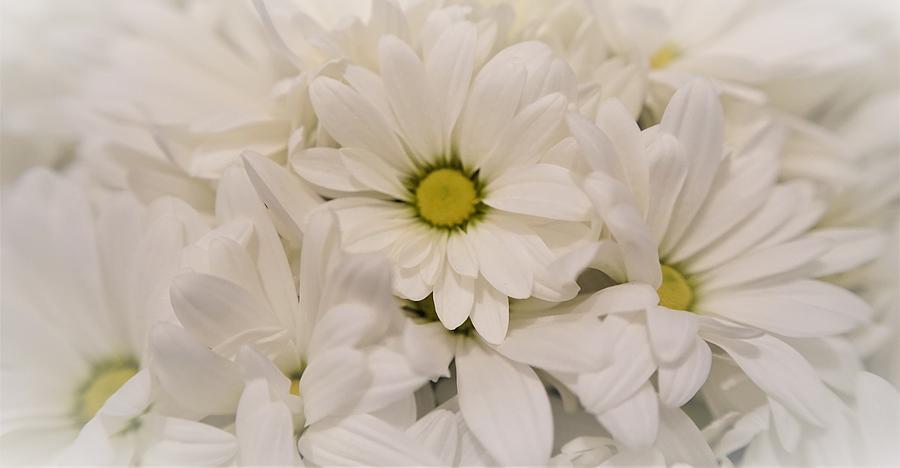 Beautiful Cut Flowers Photograph