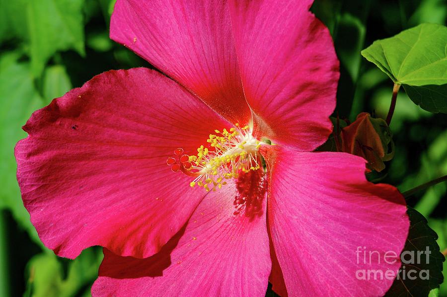 Flower Photograph - Beautiful Flower Macro by Jeff Swan